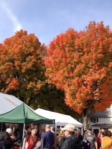 rhinebeck-trees